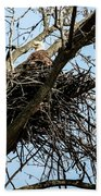 Bald Eagle In The Nest Beach Towel