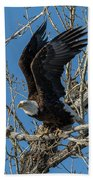 Bald Eagle Pushes Off For Launch Beach Towel