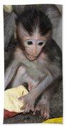 Balinese Baby Monkey Eating Beach Sheet
