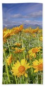 Balsam On The Rocky Mountain Front Beach Towel
