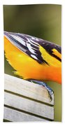Baltimore Oriole About To Jump Beach Towel