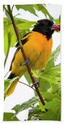 Baltimore Oriole With Raspberry  Beach Towel