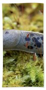Banana Slug Closeup In Moss Beach Towel