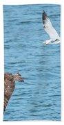 Bandit At 6 Oclock Beach Towel