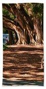 Banyans - Marie Selby Botanical Gardens Beach Towel