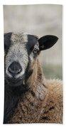 Barbados Blackbelly Sheep Portrait Beach Towel