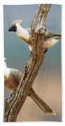 Bare-faced Go-away-birds Corythaixoides Beach Towel