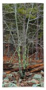Bare Tree And Boulders In Mark Twain Forest Beach Towel