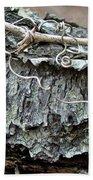 Bark - Lichen - Cat Brier Tendrils Beach Sheet