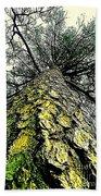 Bark Up The Tall Pine Tree Abstract In Felicina  Louisiana Beach Towel