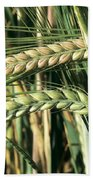 Barley, Green Stage Beach Towel