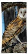 Barn Owl Framed In Cottonwood Beach Towel