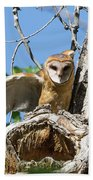 Barn Owl Owlet Stretches Beach Towel