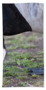 Barnacle Goose Beach Towel