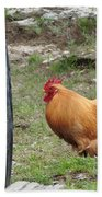 Barnyard Chicken Beach Towel