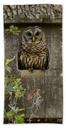 Barred Owl In Nest Box Beach Towel