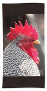 Barred Rock Rooster Beach Towel