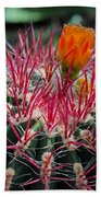 Barrel Cactus II Beach Towel
