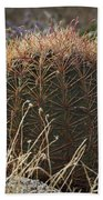 Barrel Cactus Beach Towel