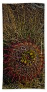 Barrel Cactus Top View Beach Towel