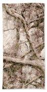 Barren Tree Beach Towel