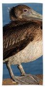 Basking Pelican Beach Towel