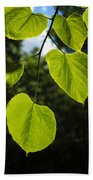 Basswood Leaves Against Dark Forest Background Beach Towel