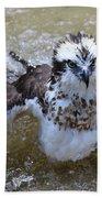 Bathing Osprey Bird Splashing About Beach Towel