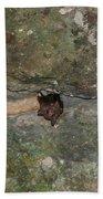 Bats Inside The Pyramid At Grupo Nohoch Mul At The Coba Ruins  Beach Towel