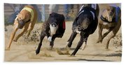 Battle Of The Racing Greyhounds At The Track Beach Towel