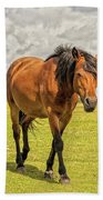 Bay Pony Beach Towel