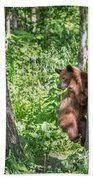 Bear Cub Climb Beach Towel