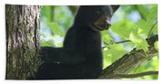Bear Cub In Tree Beach Towel