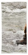 Bear Watches Another Eat Salmon In River Beach Towel