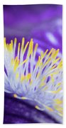 Bearded Iris Macro Beach Towel