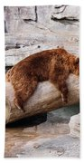 Bearly Relaxing Beach Towel