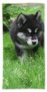Beautiful Alusky Puppy Dog Walking Through Thick Green Grass Beach Sheet