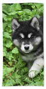 Beautiful Alusky Puppy Peaking Out Of Green Foliage Beach Sheet