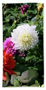 Beautiful And Fresh Dahlias In The Butchrt  Gardens,vancouver Island 1. Beach Towel