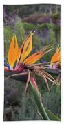 Beautiful Bird Of Paradise Flower In Bloom Beach Towel