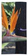 Beautiful Bird Of Paradise Flower In Full Bloom  Beach Towel