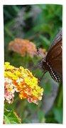 Beautiful Black Swallowtail Butterfly Beach Towel