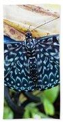 Beautiful Blue And White Butterfly Beach Towel by Bob Slitzan