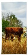 Beautiful Bovine 1 Beach Towel