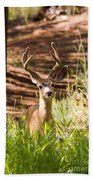 Beautiful Buck Deer In The Pike National Forest Beach Towel