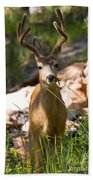 Beautiful Buck In The Pike National Forest Beach Towel