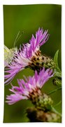 Beautiful Butterfly On Pink Thistle Beach Towel