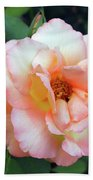 Beautiful Delicate Pink Rose On Green Leaves Background. Beach Towel