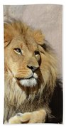 Beautiful Face Of A Lion In The Warm Sunshine Beach Towel