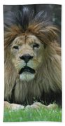 Beautiful Face Of A Male Lion With A Thick Fur Mane Beach Towel